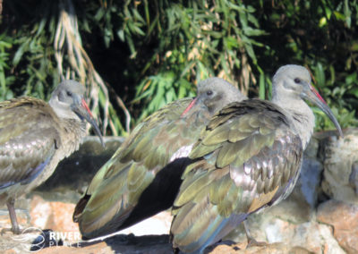 Birds. Threes company at Serendipity